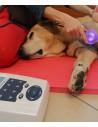 Ultrasonido veterinario