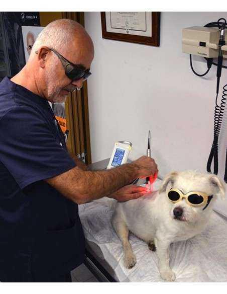 Laserterapia veterinaria